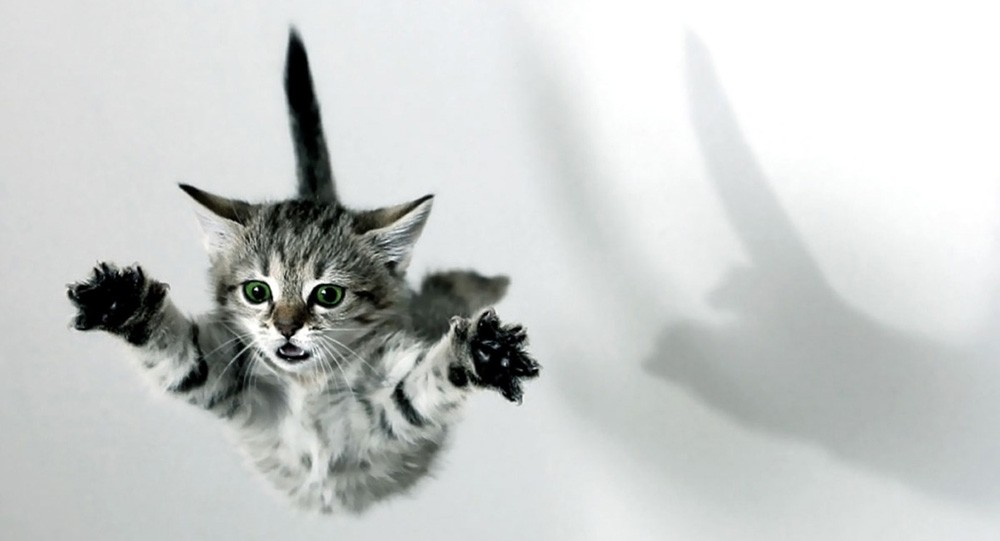 O Pulo do Gato!